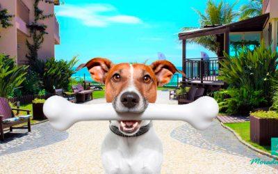 Estabelecimento Pet Friendly em Bombinhas